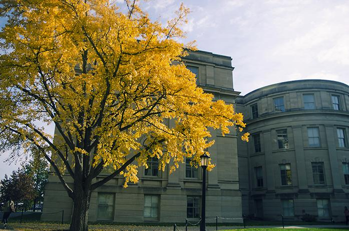 A tree by the UI pentacrest on Monday, Nov. 7, 2016. The city of Iowa City is working with Plan-It Geo to conduct a tree inventory. (The Daily Iowan/Olivia Sun)