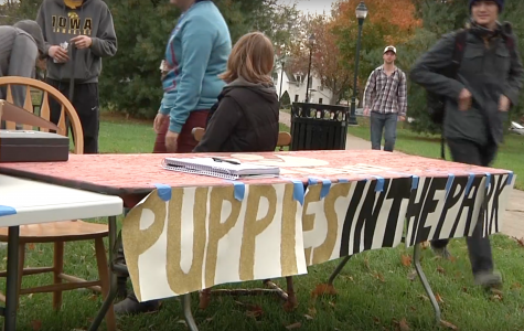 DITV: Puppies in the park fundraiser