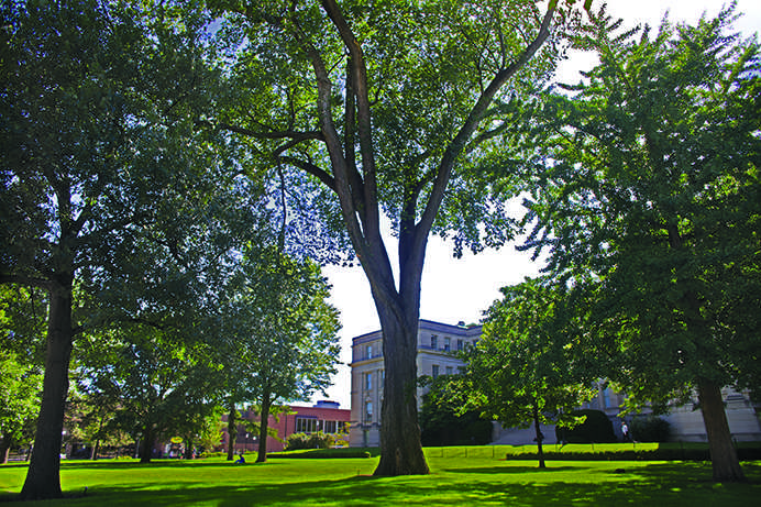 An+elm+tree%2C+the+notable+survivor+of+dutch+elm+disease%2C+stands+outside+of+Schaeffer+Hall+on+Thursday%2C+July+30%2C+2015.+The+UI+campus+used+to+flourish+with+elm+trees%2C+particularly+in+the+pentacrest.+%28The+Daily+Iowan%2FLexi+Brunk%29