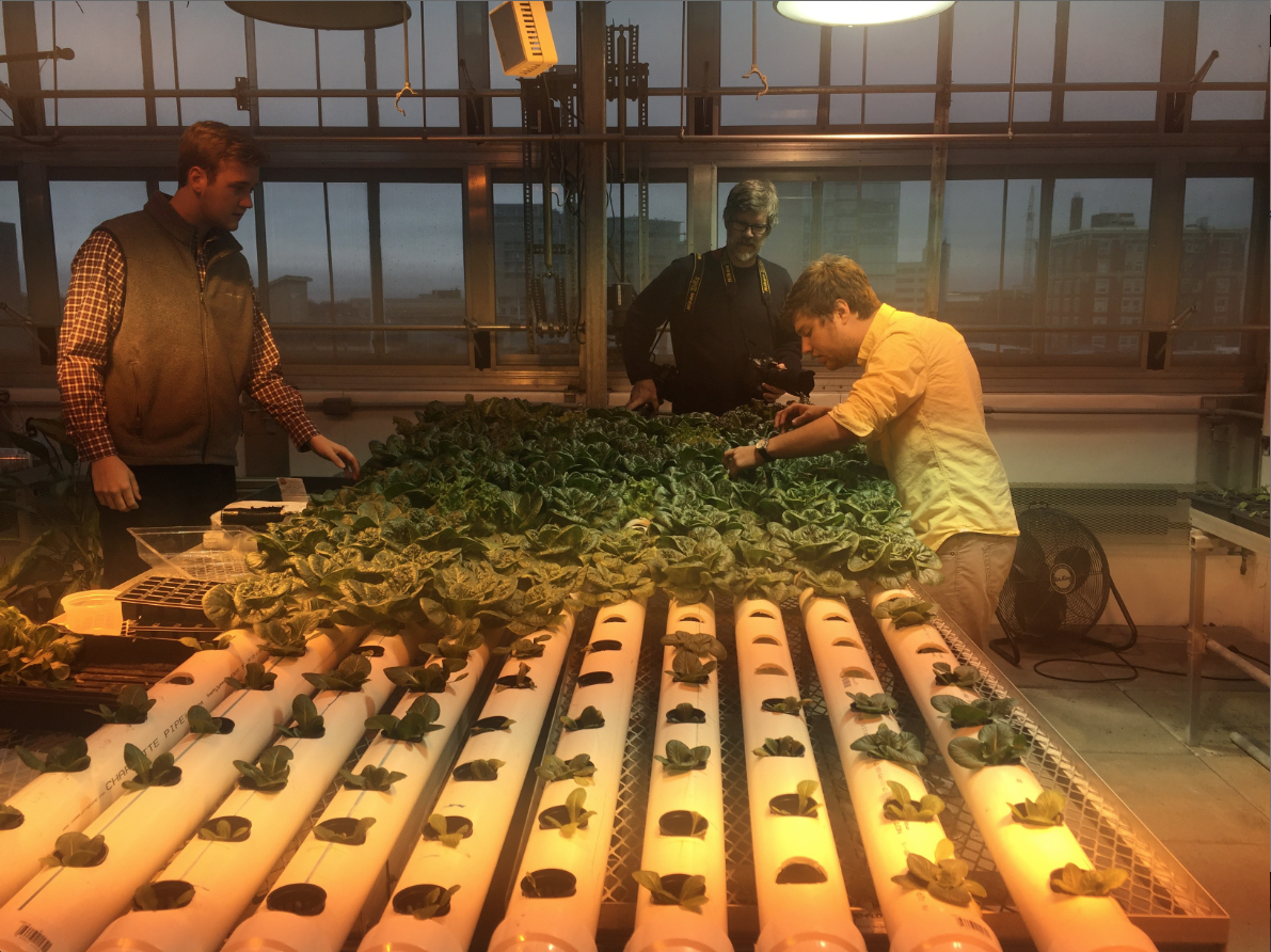 UI students Jake Krischel and Grant Gregory are growing lettuce using a hydroponic system, which is an alternative to traditionally soil-grown lettuce. The students are selling the lettuce to the UI to be used in the dining halls. (The Daily Iowan/Katelyn Weisbrod)