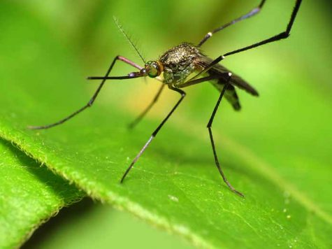 UI receives $1 million Zika grant from CDC