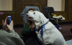 Students play with therapy dogs on Wednesday, Dec. 14, 2016. The finals week event was sponsored by UI Paws, a student organization which promotes animal welfare. (The Daily Iowan/Olivia Sun)