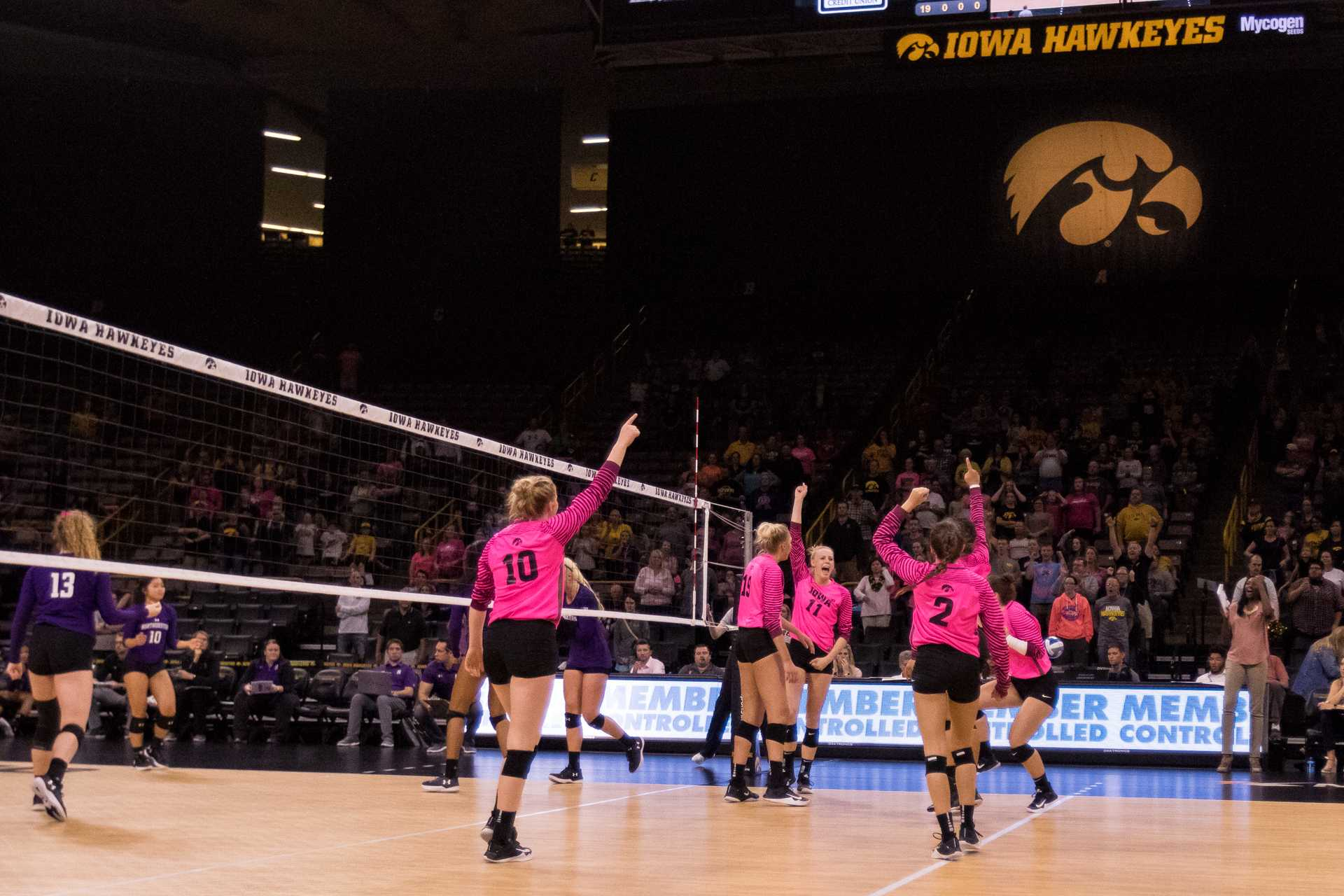 Iowa Hawkeye volleyball players celebrate the final point of the match against the Northwestern University Wildcats on Saturday, Oct. 21, 2017. The Hawkeyes defeated the Wildcats three sets to zero. (David Harmantas/The Daily Iowan)