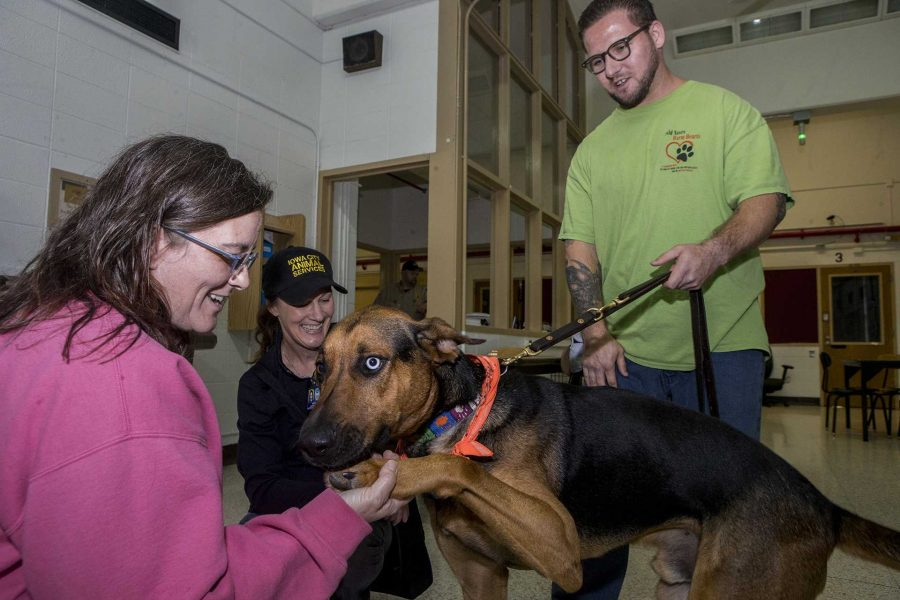 Iowa City Animal Services workers check on the progress of a dog trained at the IMCC on Tuesday Oct. 10, 2017. A new program allows inmates at the IMCC volunteer to work with rescued dogs from the shelter as well as providing preliminary training for some service dogs.