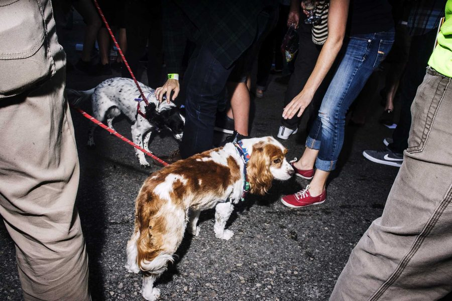 Several guests at the Northside Oktoberfest brought their pets on Saturday, Sept. 30, 2017. The dogs were especially popular with the crowd.  (James Year/The Daily Iowan)