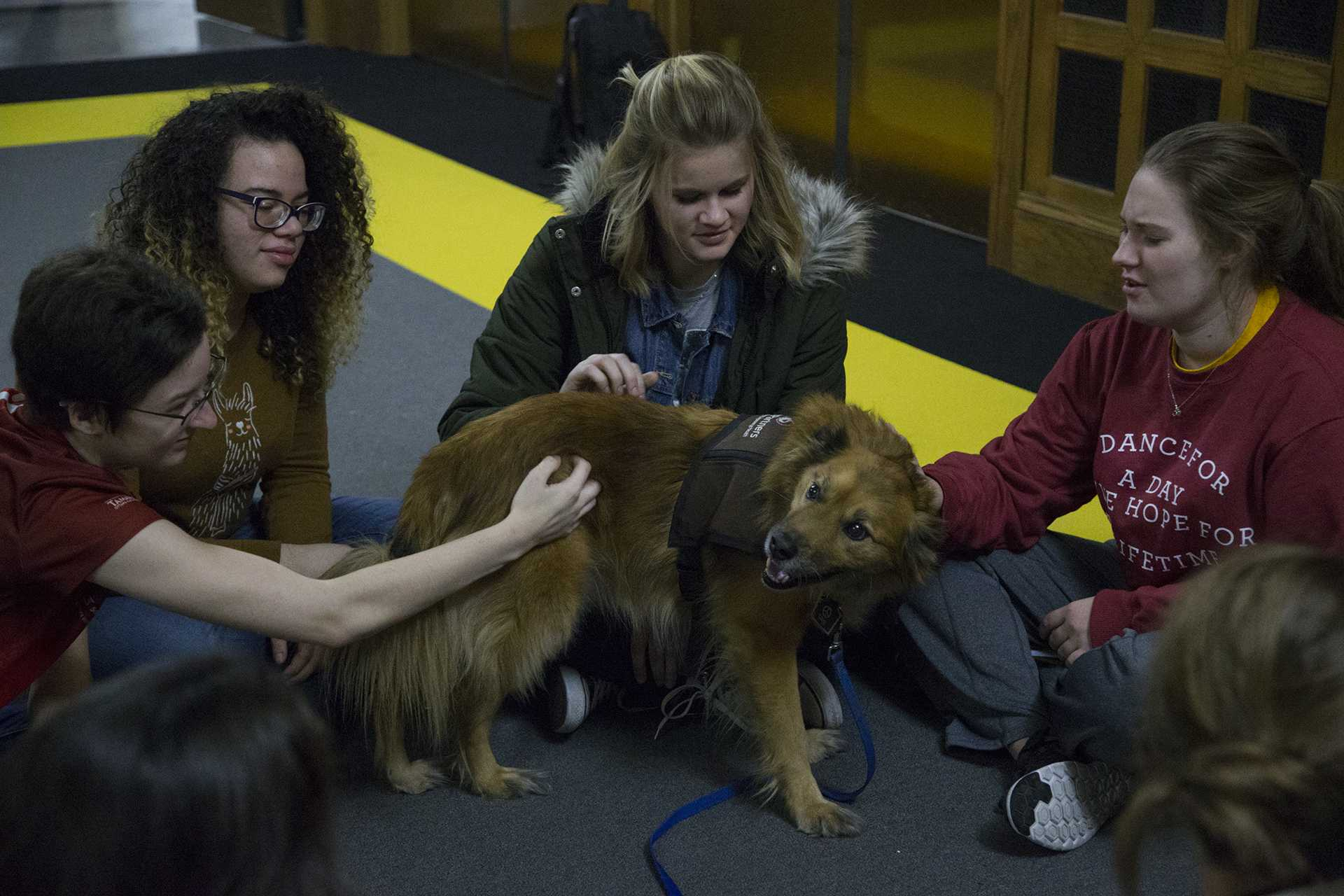 Students pet dogs during UIowa Paws event at the IMU on Monday December 11, 2017. UIowa Paws (promoting animal welfare) will have therapy dogs from Cedar Rapids and Johnson County at the IMU from Monday to Wednesday to promote mental wellness during finals.(Katie Goodale/ The Daily Iowan)