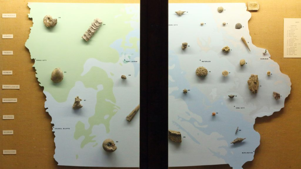 Fossils are displayed on a map of Iowa in MacBride Hall on Tuesday, Feb. 20, 2018. The Earth and Environmental Sciences Department is seeking to make the crinoid fossil recognized as Iowas state fossil. (Ashley Morris/The Daily Iowan)