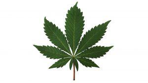 Federal government makes moves to decriminalize marijuana