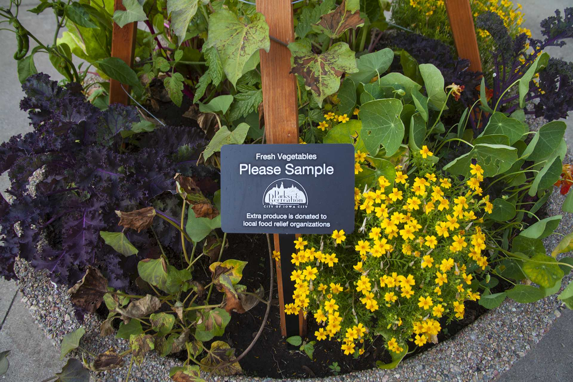 On June 16, an edible plant holder is seen outside City Hall. Over 40 of them have been placed around Iowa City. (Tate Hildyard/The Daily Iowan)