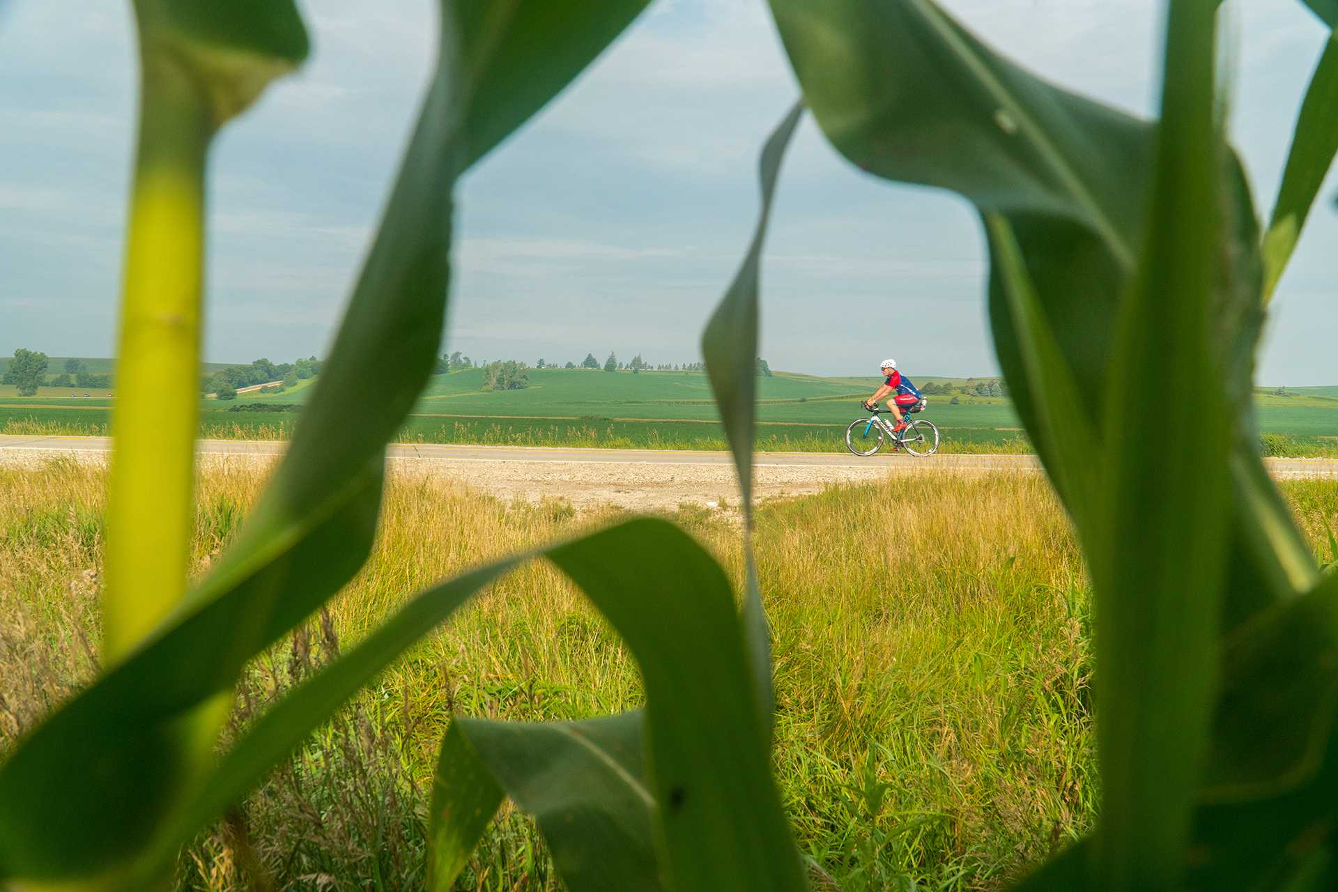 A biker pedals through rural cornfields close to the outskirts of Aspinwall, Iowa.
