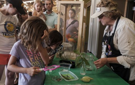 Monarch festival celebrates, advocates for famous vanishing butterfly