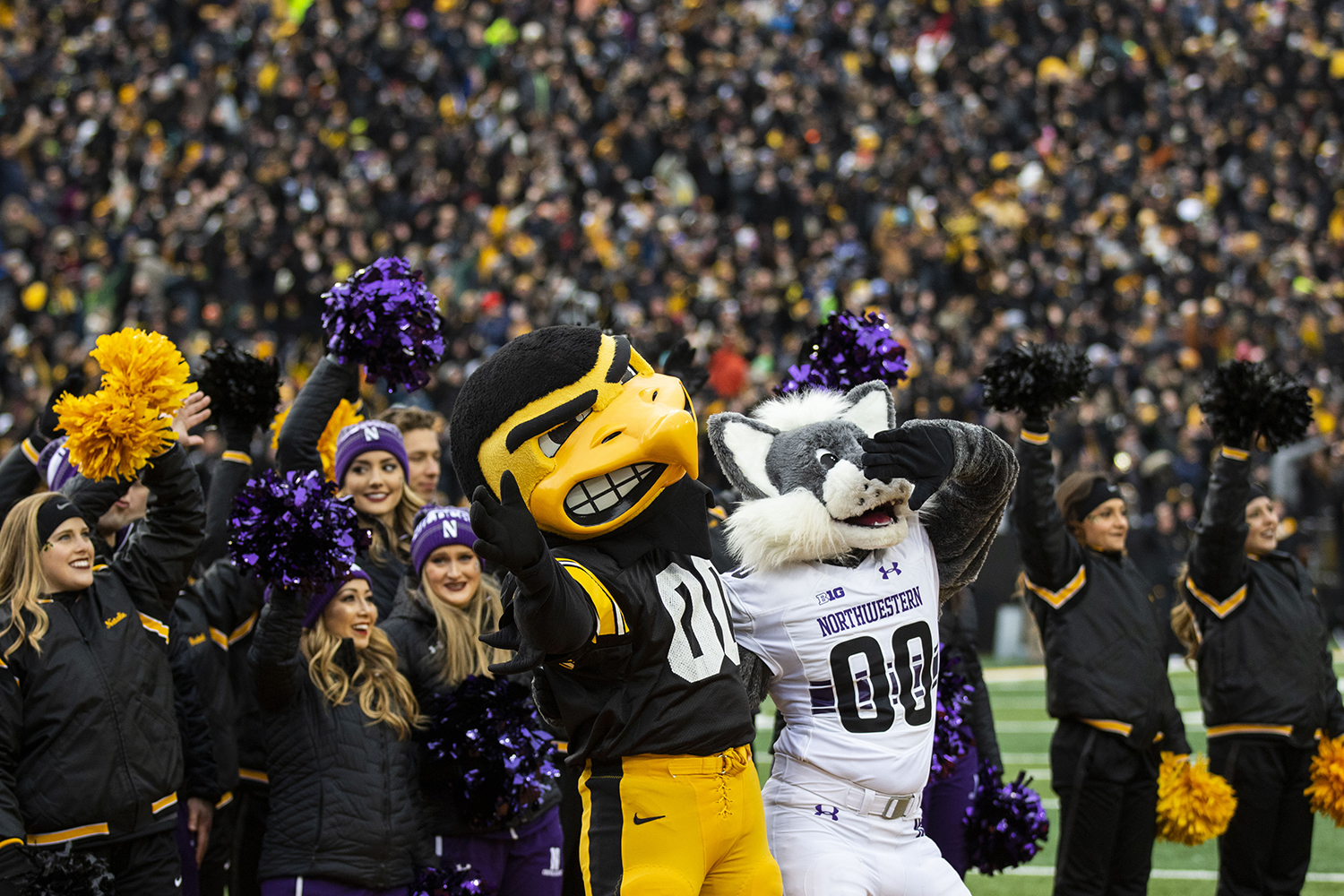 Herky+the+Hawk+and+Willy+the+Wildcat+wave+to+the+Stead+Family+Children%27s+Hospital+during+the+Iowa%2FNorthwestern+football+game+at+Kinnick+Stadium+on+Saturday%2C+November+10%2C+2018.+The+Wildcats+defeated+the+Hawkeyes%2C+14-10.+%28Lily+Smith%2FThe+Daily+Iowan%29