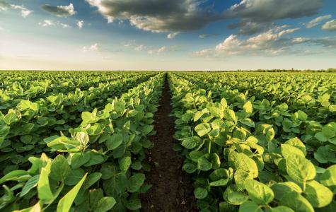 Iowa agriculture: New NAFTA will not repair tariff damage