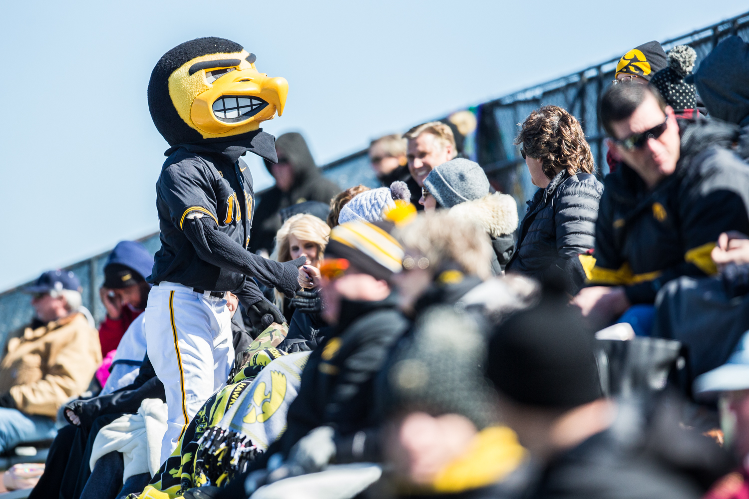 Herky+interacts+with+fans+between+innings+during+the+first+game+of+a+baseball+doubleheader+between+Iowa+and+Cal-State+Northridge+at+Duane+Banks+Field+on+Sunday%2C+March+17%2C+2019.+The+Hawkeyes+defeated+the+Matadors%2C+5-4.
