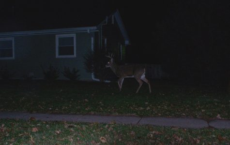 IC City Council undecided on how to deal with deer population