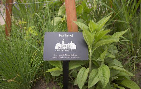 New planters encourage residents to brew their own tea