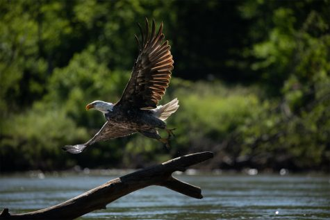 Photos: Iowa River Expedition, Days 9-13