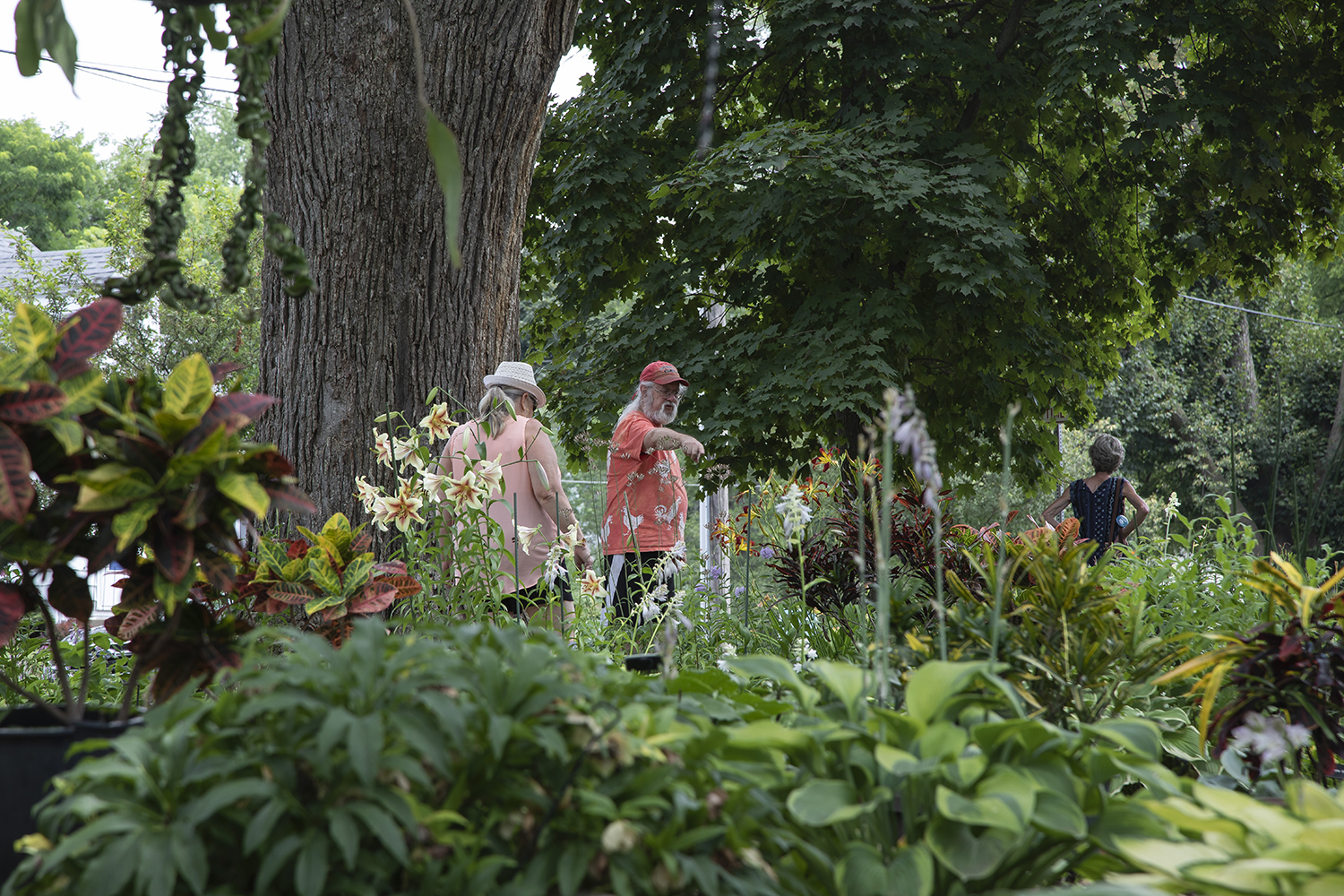 Philip Mears guides visitors at his garden during Open Gardens on Saturday, July 13, 2019. Open Gardens are garden walks hosted by Project Green on July 13-14, 2019. (Tian Liu/The Daily Iowan)