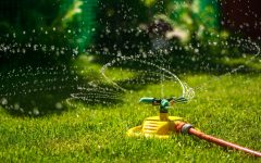 Helton: America's lawns aren't worth their watery price tag