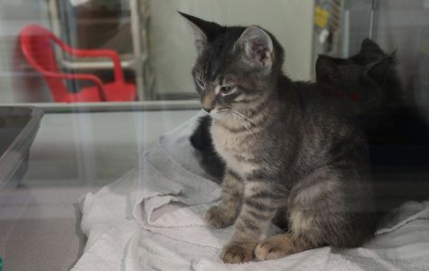 Iowa City businesses invited to foster kittens for animal center