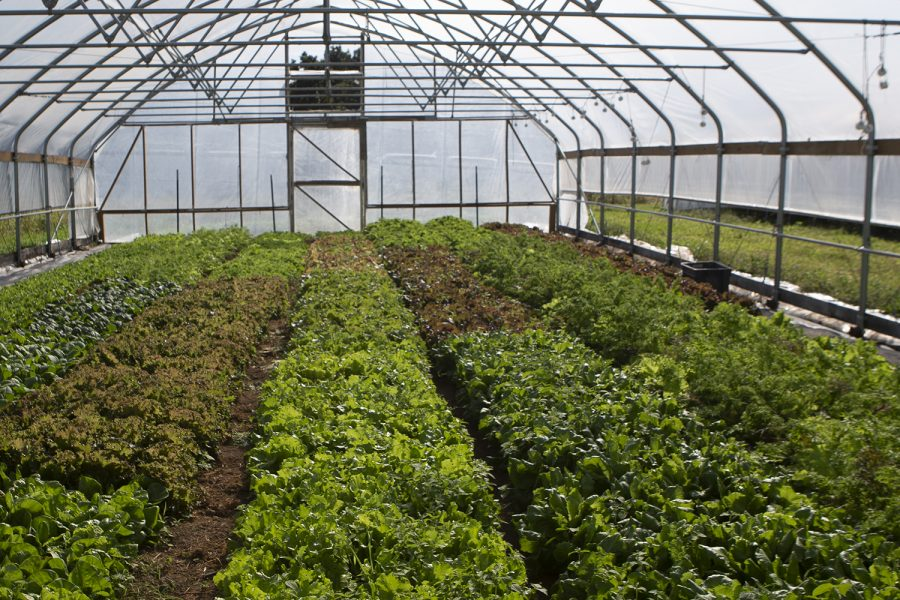 Plants+in+a+greenhouse+are+seen+at+Sundog+Farm+%26amp%3B+Local+Harvest+CSA+on+Tuesday%2C+Sept.+24%2C+2019.