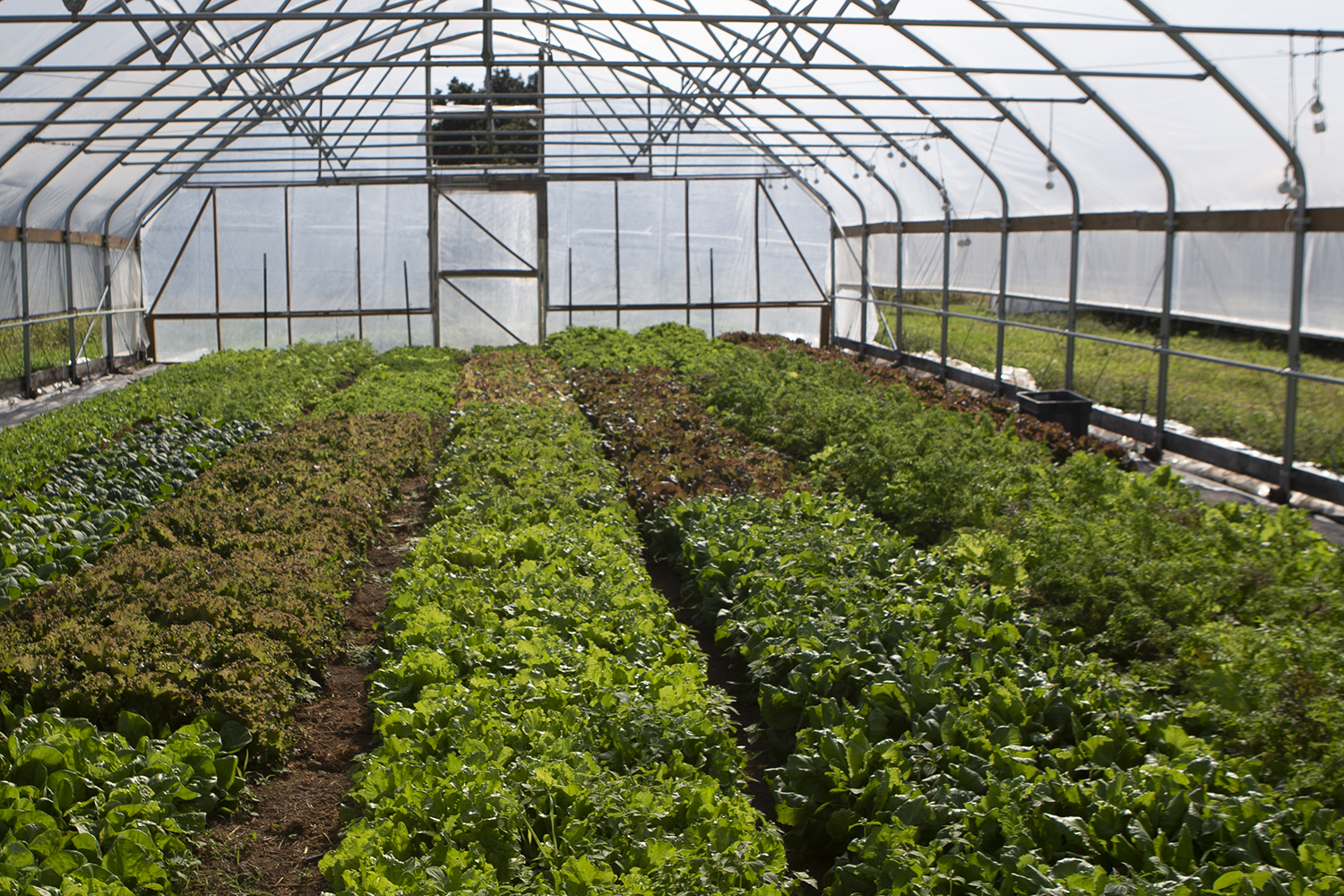 Plants in a greenhouse are seen at Sundog Farm & Local Harvest CSA on Tuesday, Sept. 24, 2019.