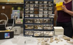 A portion of a fossil collection sits out in Trowbridge Hall on the University of Iowa campus on Oct. 15, 2019. The collection, which includes approximately 18000 fossils, was donated to the UI in August by Fort Dodge resident Robert Wolf.
