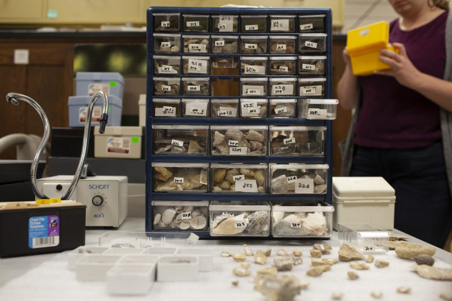 A+portion+of+a+fossil+collection+sits+out+in+Trowbridge+Hall+on+the+University+of+Iowa+campus+on+Oct.+15%2C+2019.+The+collection%2C+which+includes+approximately+18000+fossils%2C+was+donated+to+the+UI+in+August+by+Fort+Dodge+resident+Robert+Wolf.+