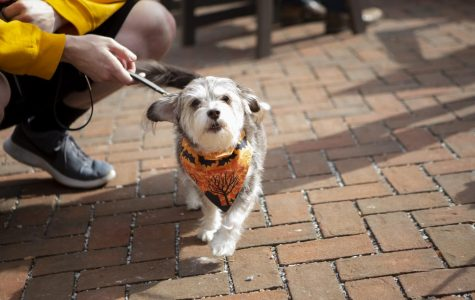 All treats, no tricks: Costumed dogs took over Big Grove for Wag-O-Ween event