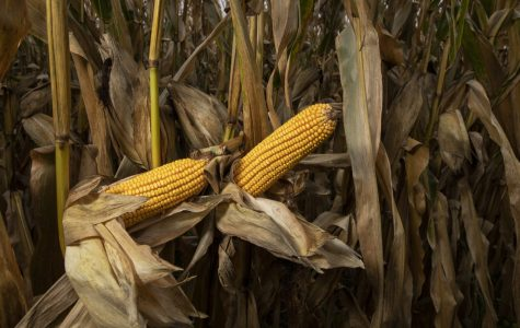Letter to the Editor: Support for Johnson County farmers remains vital
