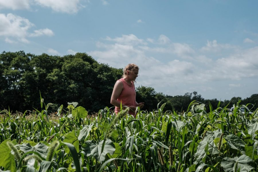Corbin Scholz walks along her crops at her farm outside of Solon, Iowa, on Sept. 23, 2019.