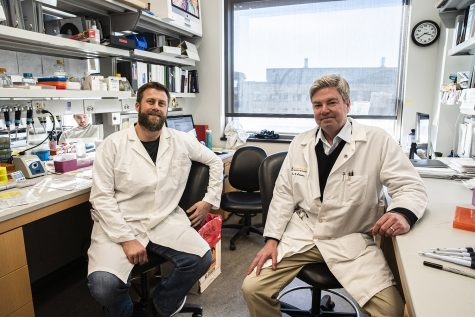 UI research leads to possible treatment for diabetes, fibrosis