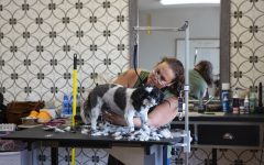 Groomer Brandi Reynolds works on Tuesday, July 7, 2020 at Hawk-Dog Grooming in Iowa City.