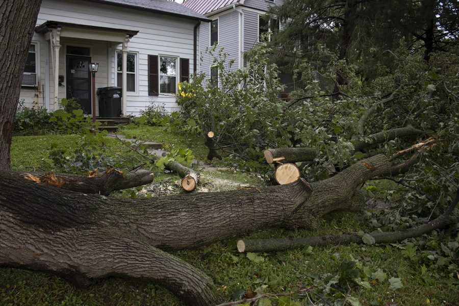 A fallen tree partially sawed is seen on Monday, Aug. 10, 2020. With wind gusts around 80 mph, the derecho --a widespread wind damage event produced by severe thunderstorms-- hit Iowa City in the afternoon causing tree damage and power outages.