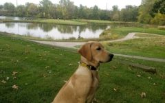 Dwight the dog, Finkbine Golf Course's new course dog. Contributed.