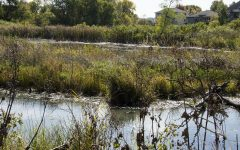 Marsh and watershed tied to Olde Towne Village, Westbury and Glastonbury St..As seen on Tuesday, Oct.6, 2020.