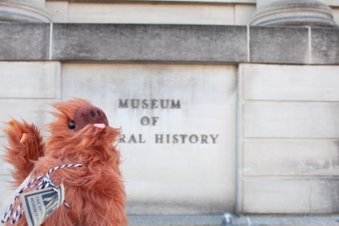 The Prairie Kitchen Store on N Linn St is selling Rusty the Sloth stuffed animals to help raise money for the Natural History Museum. Rusty waits outside for the Natural History Museum to open on November 11 2020.