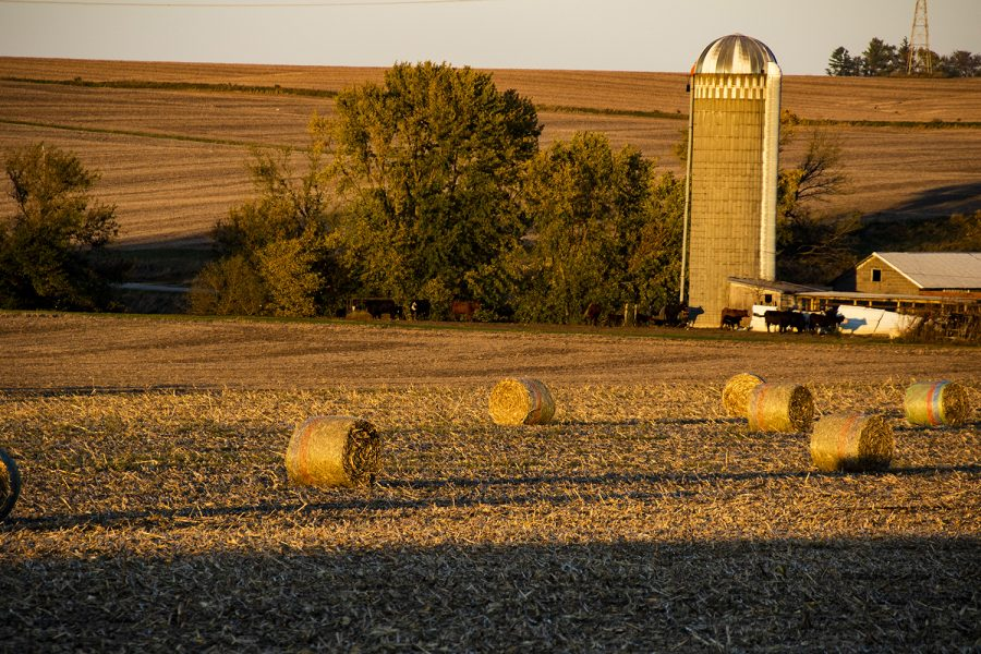 Bails that were made from the after product of the corn harvest wait in a field for pickup on Oct. 12, 2020. (Jeff Sigmund/Daily Iowan)
