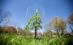 A sapling is seen in Court Hill Park on Thursday, April 29, 2021. As a part of Iowa City's Project 51, 60 trees were planted in Court Hill Park and 400 trees were planted throughout Iowa City in 2020.  (Ayrton Breckenridge/The Daily Iowan)