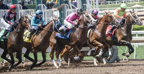 4 Insightful Advice on Picking the Right Your Horse to Bet on Racing Events