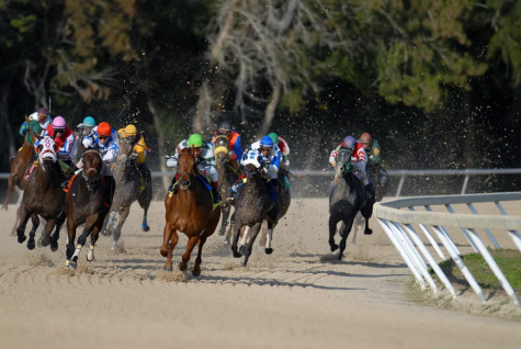 2021 Breeders' Cup Hot Picks: Top Ten Horses To Bet On