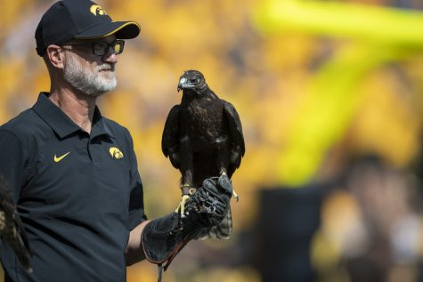 A hawk from the Iowa Raptor Project rests on a handler's hand during a football game between Iowa and Kent State at Kinnick Stadium on Saturday, Sept. 18, 2021.